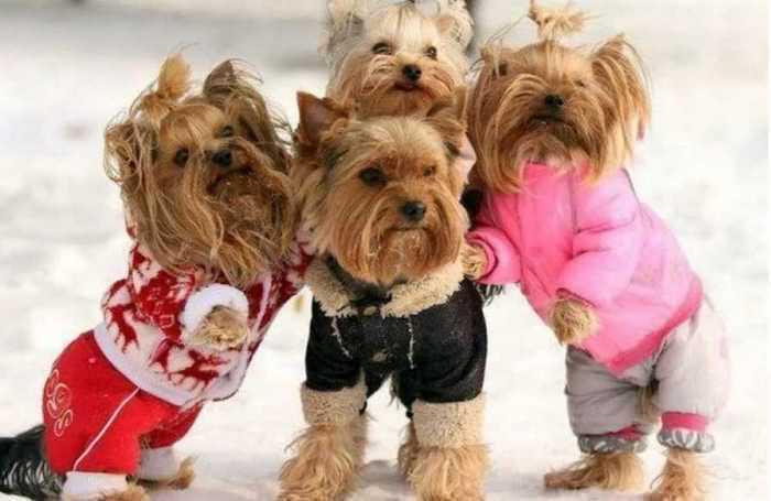 собачки в комбинезонах - им не холодно