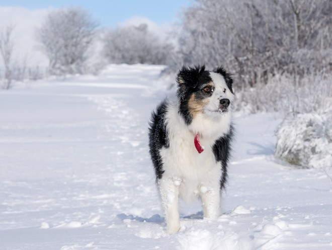 Собака бегает по улице зимой