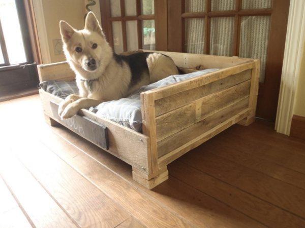 Собака без места будет стремиться лидировать