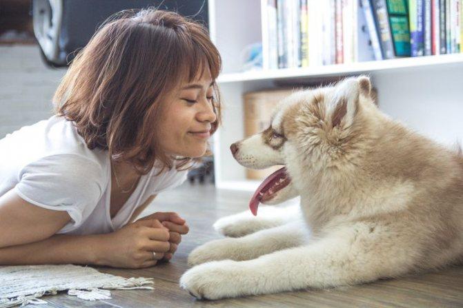 Собака хаски и хозяйка
