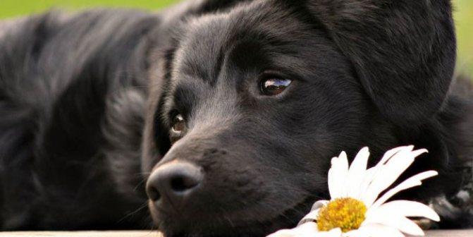 Собака и цветок