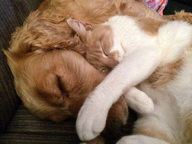 Собака и кошка спят в обнимку фото