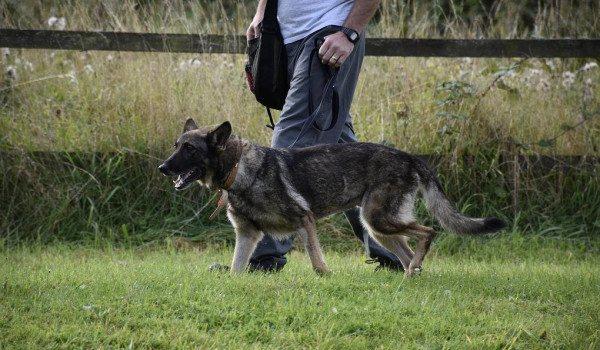 Собака идет рядом с хозяином за городом