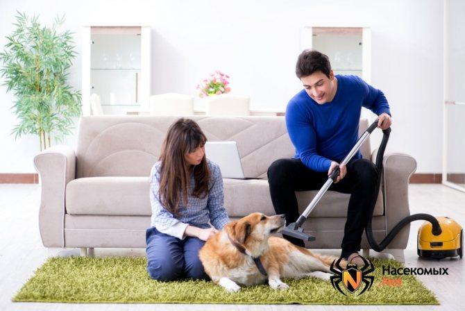 Собака источник блох в доме