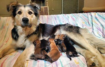 Собака кормит своих новорожденных щенков