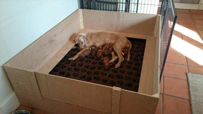 Собака лежит в манеже со своими щенками.