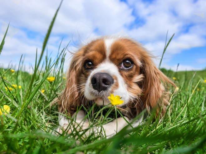 Собака лежит в траве