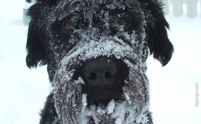 Собака на морозе