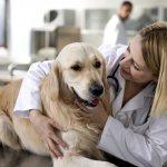 Собака на вакцинации