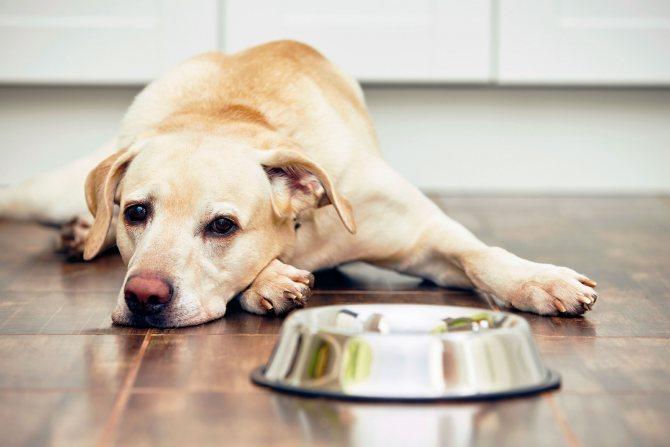 Собака не хочет есть корм
