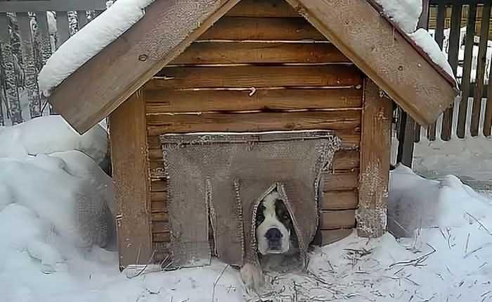 собака не мерзнет в хорошей будке