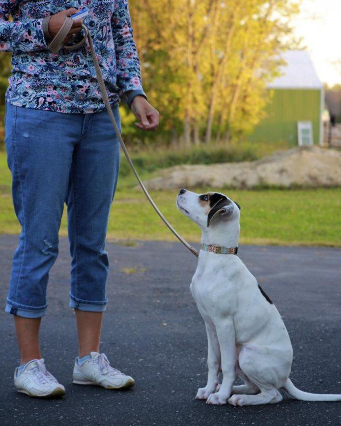 собака огрызается когда ее наказываешь