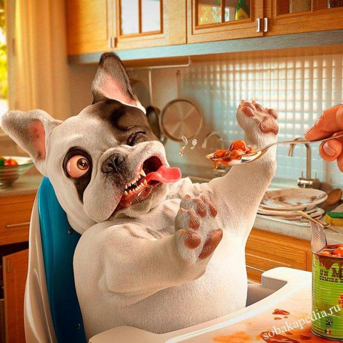 Собака отказывается от еды-ищем и устраняем причину