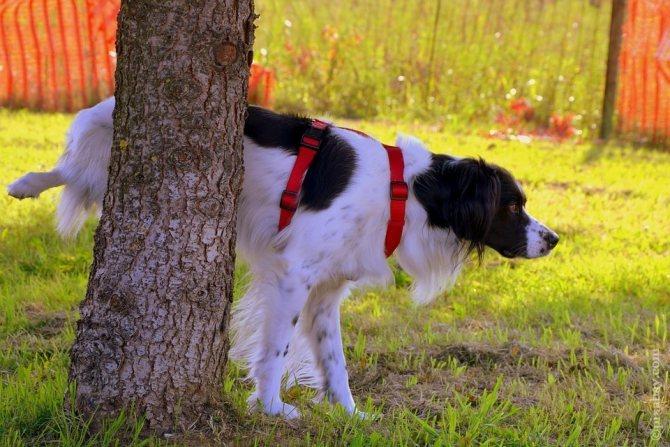 Собака под деревом