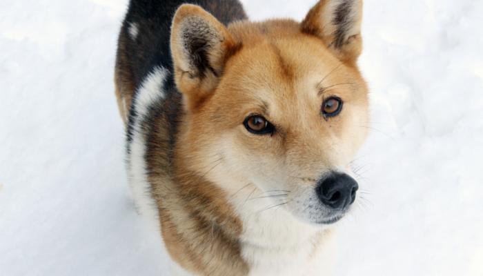 собака подбирает на улице