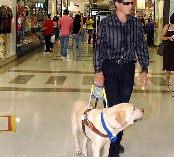 собака поводырь для слепых
