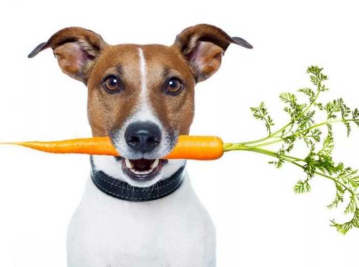 собака с морковкой