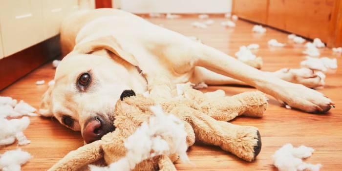 Собака с растерзанной мягкой игрушкой