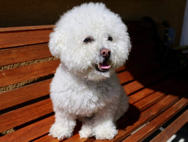 Собака сидит на скамейке у дома