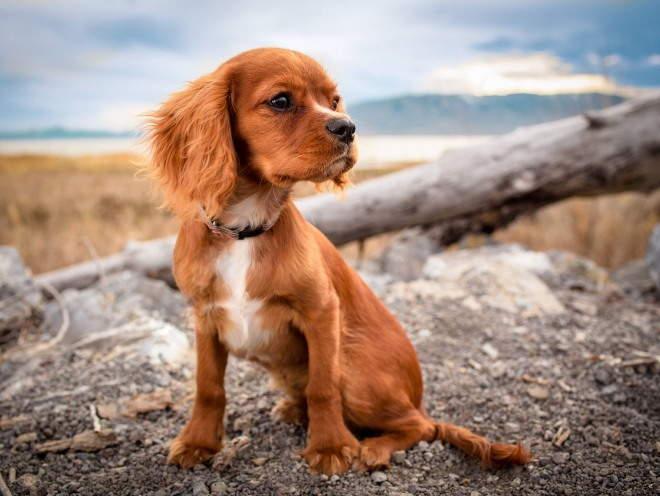 Собака сидит на ветреном месте