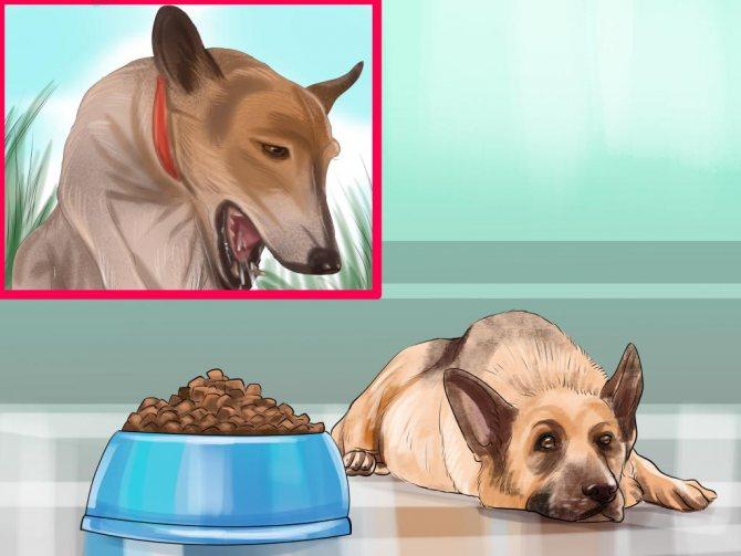 Собака страдает от токсикоза
