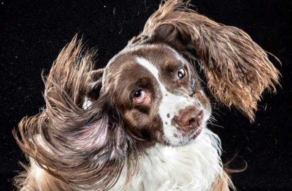Собака трясет головой