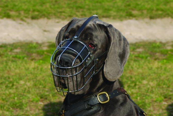 Собака в металлическом наморднике