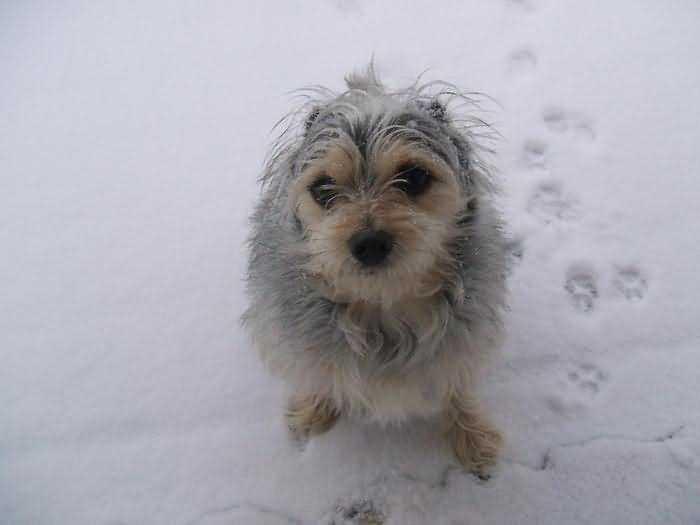 собакам холодно зимой