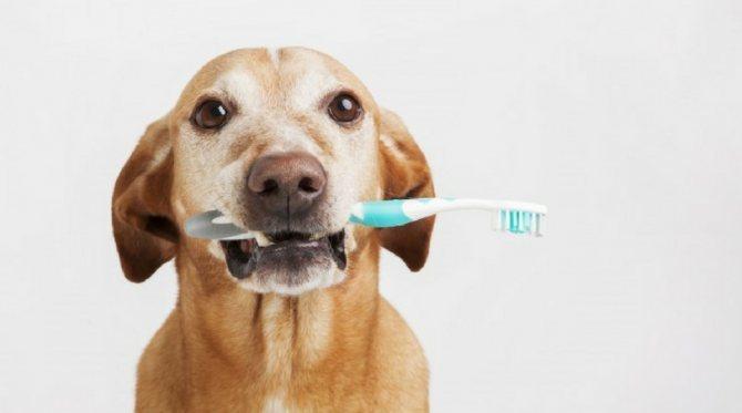 Собакам необходимо чистить зубы