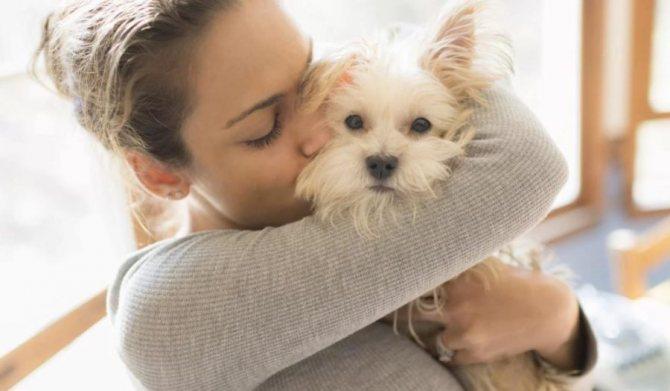 собаки на которых нет аллергии