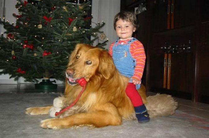Собаки очень ласковые, безмерно любящие детей