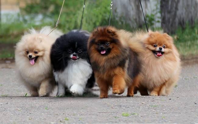 Собаки разного цвета