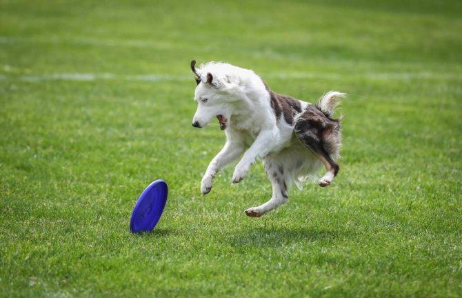 Собаки травмируются во время игр