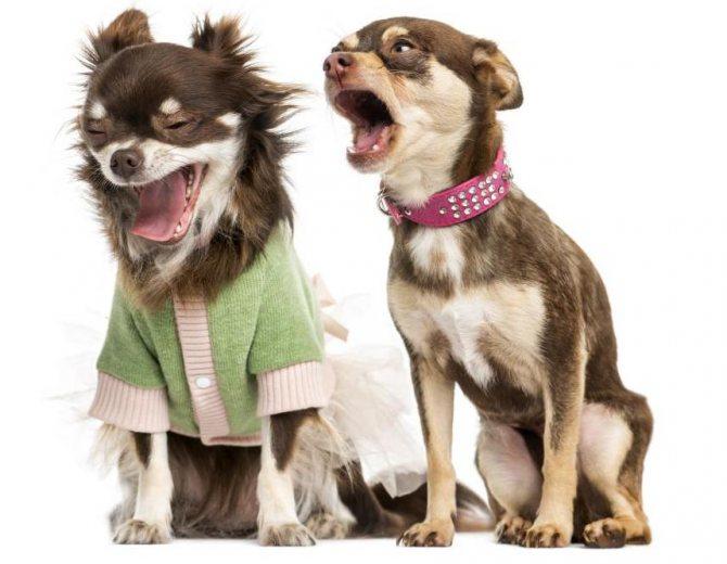 собаки воют без хозяина