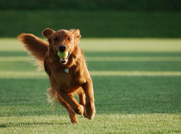 сочинение собака лучший друг человека
