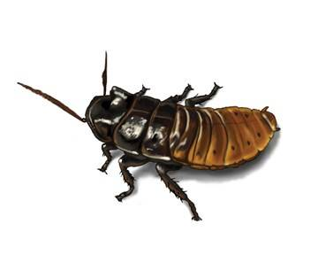 содержание тараканов