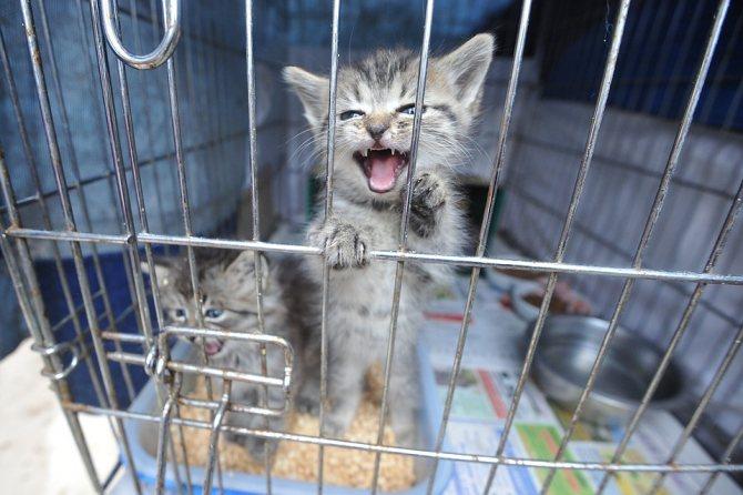 Содержание животных в клетке усугубляет последствия стресса