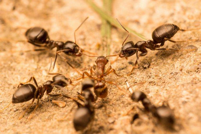 Сон о муравьях: что может быть