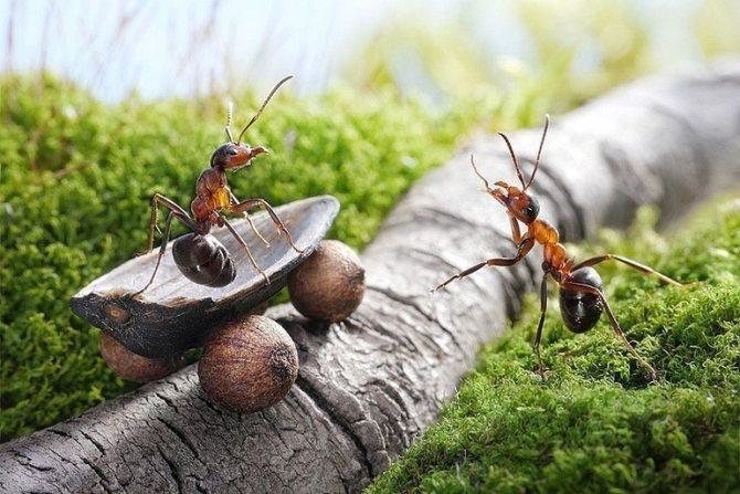 Сон о муравьях: для мужчин и женщин