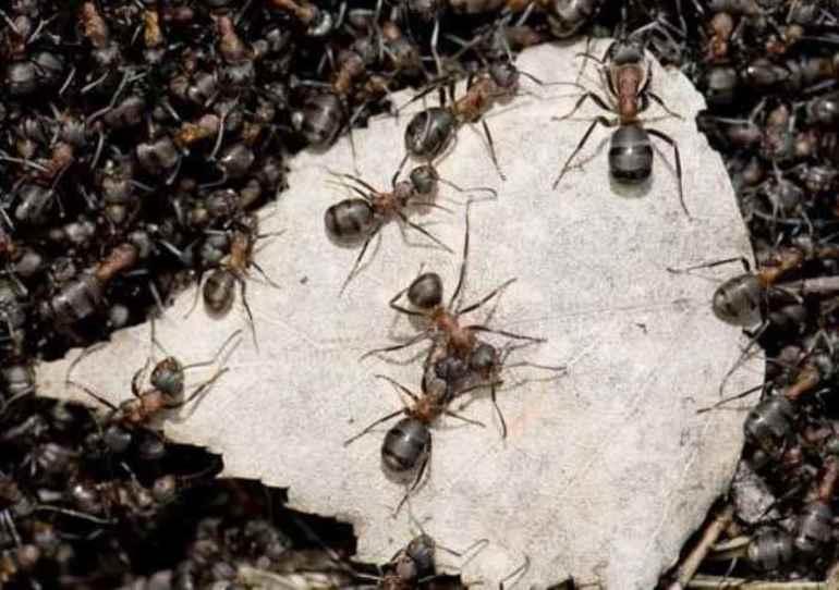 Сон о муравьях: сонник
