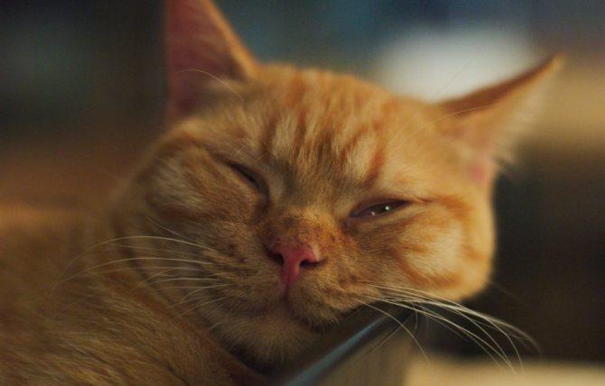 Сонливость - побочное действие