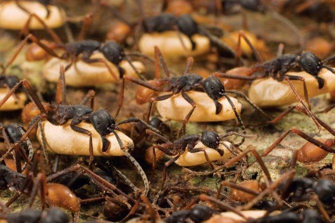 Сонник – к чему снится, что муравьи кусаются, кусают ноги?