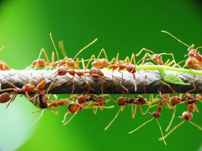 Сонник - к чему снятся муравьи во сне девушке, женщине: значение сна