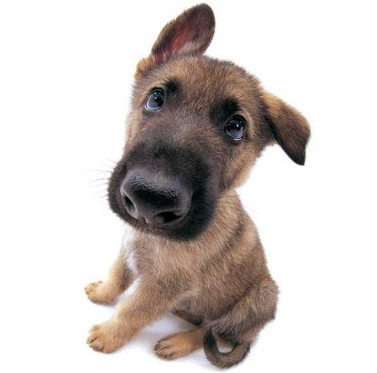 соответствие возраста собаки и человека