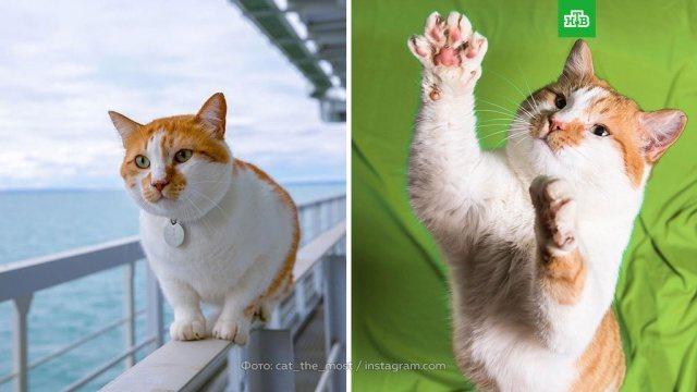 Составлен рейтинг самых популярных котов десятилетия. Интернет, кошки, социология и статистика. НТВ.Ru: новости, видео, программы телеканала НТВ