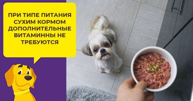 Составляем правильный рацион для ши-тцу с учетом возраста собаки