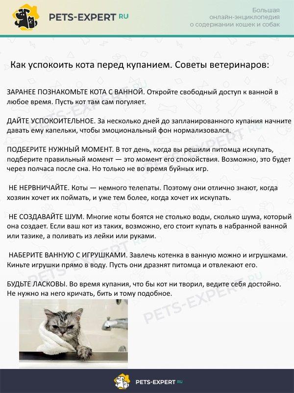 Советы ветеринаров, как успокоить кота перед купанием