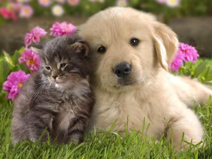 Сравнение кошек и собак