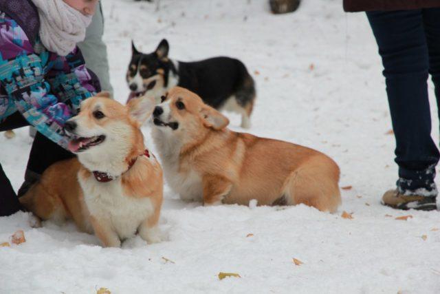 Среди пород собак есть те, что чувствительны к активному компоненту