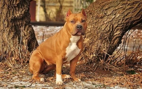 Средние-породы-собак-Описания-особенности-названия-и-виды -средних-пород-собак-17